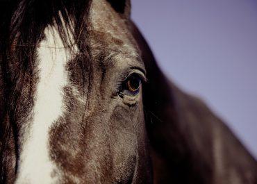 P2P-Horse Racing