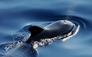 Whales-Biodiversity-Week