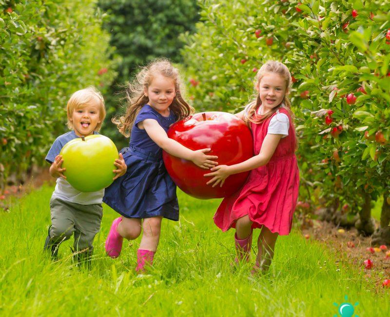 Waterford Harvest Festival