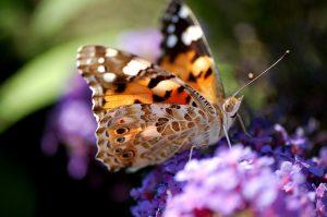 Biodiversity Week